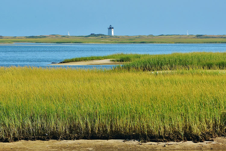 Yellow Green Marsh land in the foreground, then blue waters, then the light house in the distance