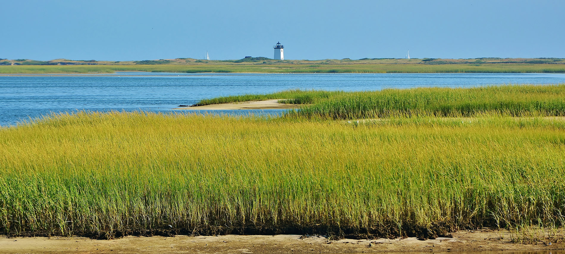 Green and Yellow marsh with blue water then a lighthouse in the background